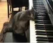 کلیپ خنده دار موبایل – پیانو زدن یک گربه